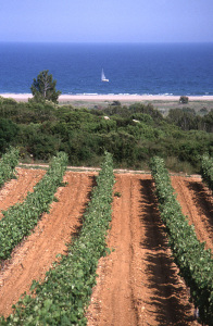 Appellation communale la Clape, des vignes qui regardent la mer (Château Rouquette)