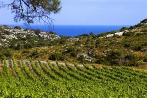 Languedoc-Roussillon viticole