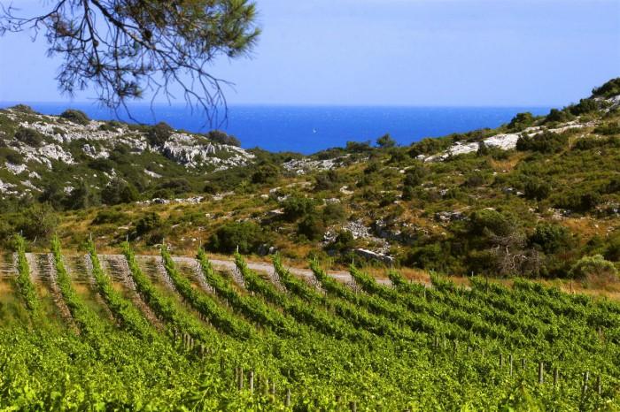 Dans le Languedoc, vignoble en AOC La Clape du château L'Hospitalet près de Narbonne
