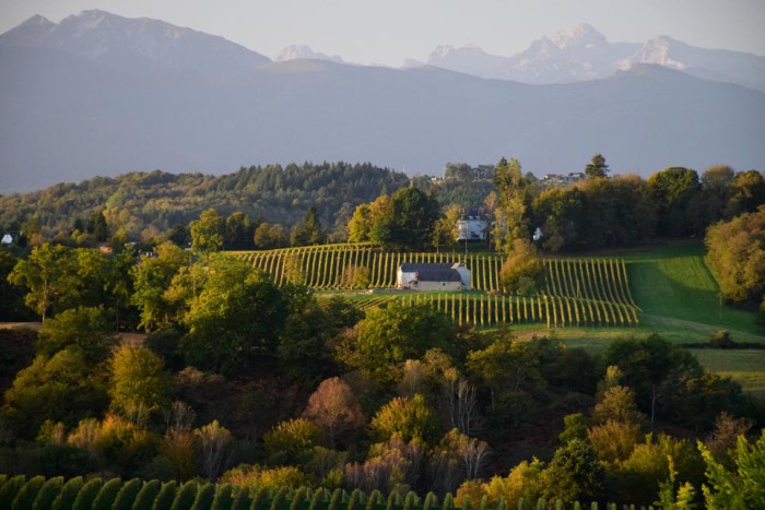 Le vignoble du Jurançon dans la région de Pau