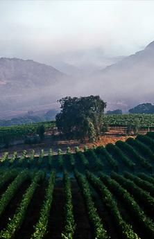 Parcelle de cabernet sauvignon du domaine Faust à Coombsville dans Napa Valley aux pieds d'Atlas Peak.