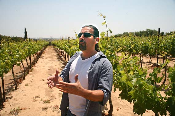 Le cabernet franc en Israel