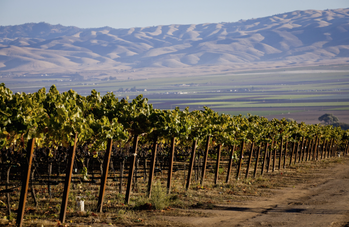 Santa Lucia Highlands AVA