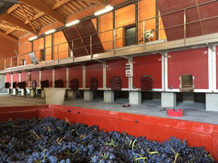 Vinification beaujolaise