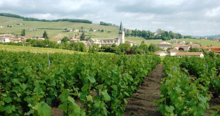 Chenas, un des 10 crus du Beaujolais