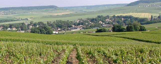 Champagne Vincent d'Astrée à Pierry
