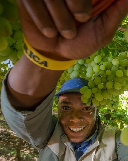 Afrique du Sud, vins et vignobles