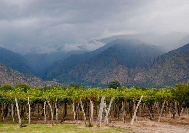Mendoza en Argentine, le royaume du malbec