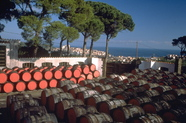 L'élevage des vins doux naturels dans le Roussillon