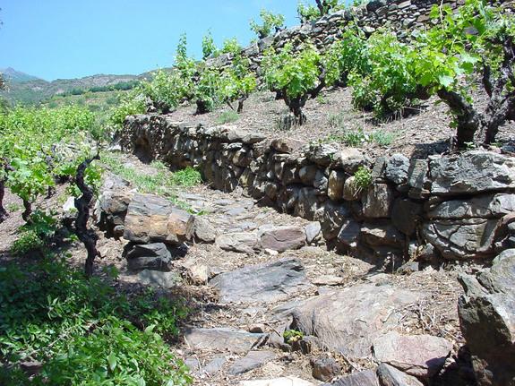 Roussillon, murette de schiste