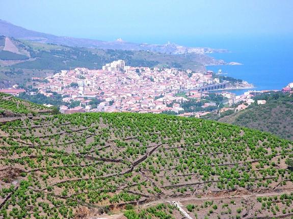 Roussillon vignoble de Collioure Banyuls