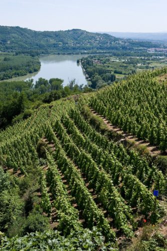 Le vignoble rhodanien