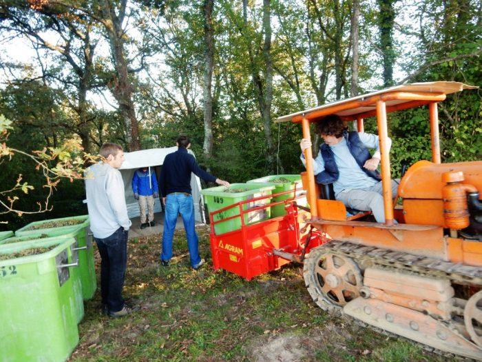 récolte du petit manseng du Clos Pelat à Aubertin