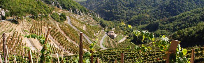 Ardèche, vignes en terrasses