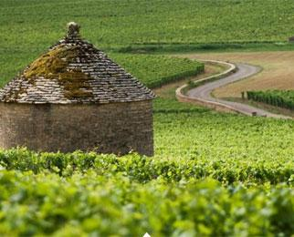 Vignoble de la Côte de Beaune, du domaine des Hospices de Beaune,