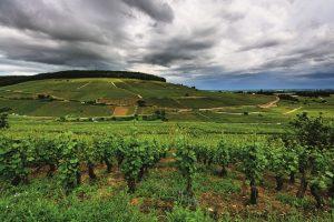 Montagne de Corton, montagne mythique (Côte de Beaune) Bourgogne