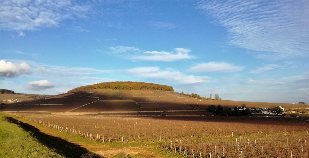Montagne de Corton (Photo FC)