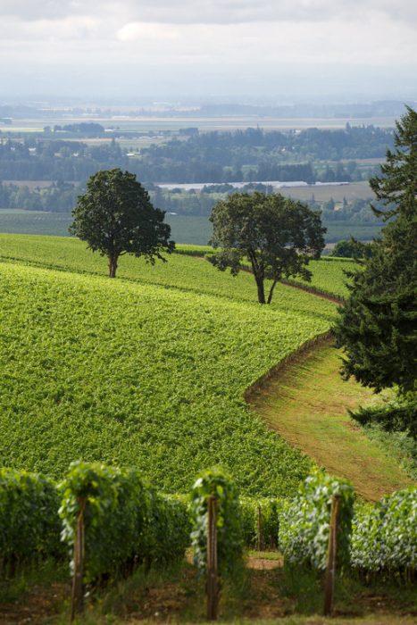 Dundee Hills dans l'Oregon