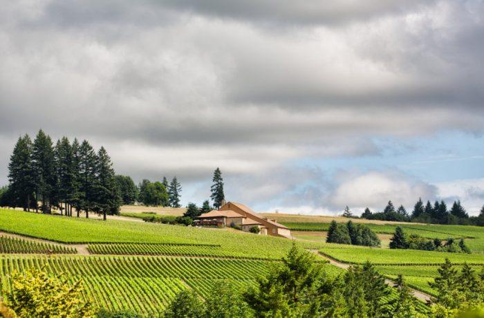 Le Domaine Drouhin Oregon aux Etats-Unis (Côte ouest)
