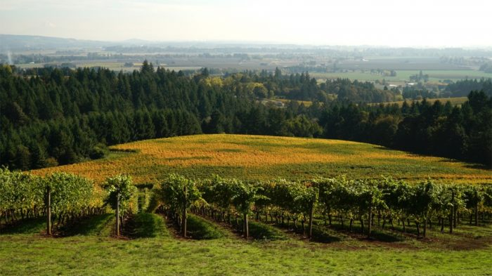 Domaine Serene Oregon