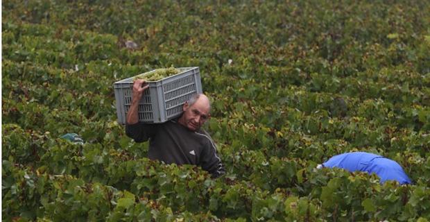 Vendanges Crémant de Bourgogne