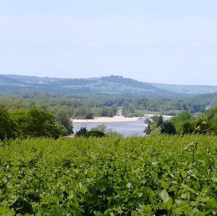 Le vignoble de Pouilly depuis Les Loges, dominant la Loire