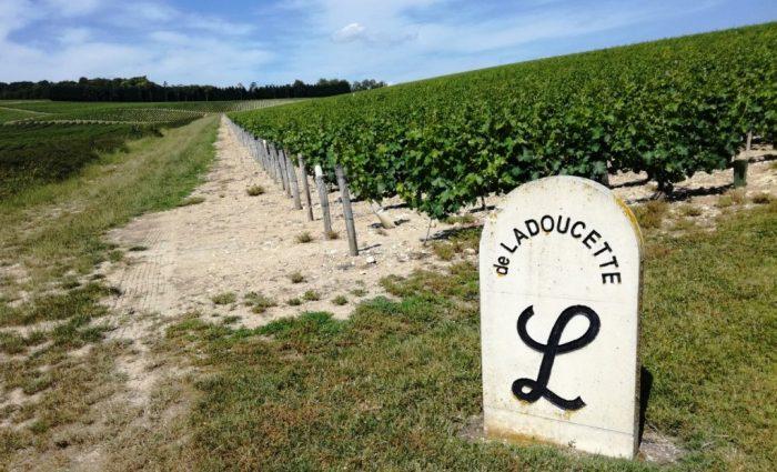 vigne de Ladoucette