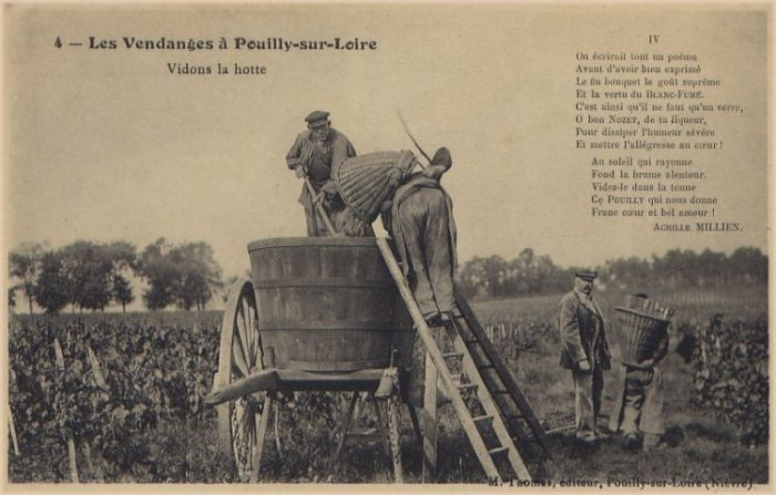 Vendanges à Pouilly