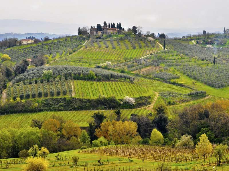 Vignoble de Chianti en Toscane