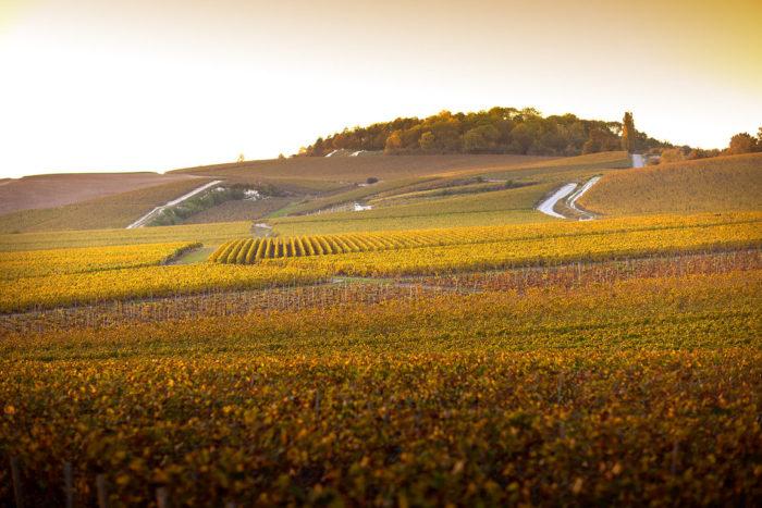 Pol Roger possède en propre, 92 ha sur une vingtaine des meilleurs crus de la Vallée de la Marne, de la Montagne de Reims et de la Côte des Blancs (Phto Pol Roger)