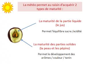 On assiste aujourd'hui à une inadéquation croissante entre la maturité de la pulpe, la pellicule et les pépins