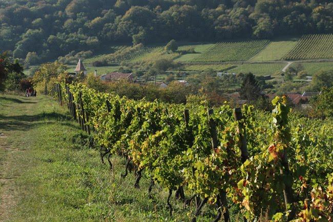 Le village de Lucey, l'un des 18 villages des Côte de Toul ; au loin, les vignes l'Évêque
