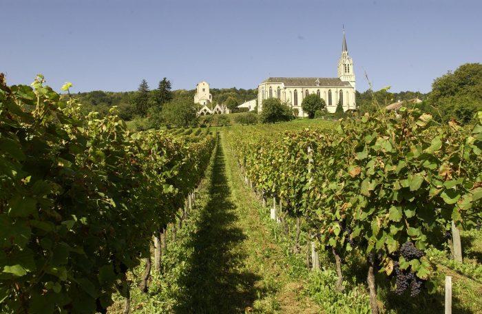Côtes de Toul, 3 cépages dominent le vignoble, le gamay, le pinot noir et l'auxerois (ici, le pinot noir)