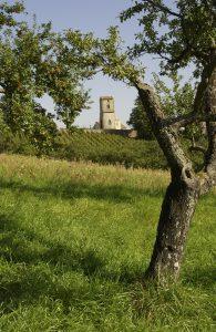Les Côtes de Toul, un vignoble de 110 ha sur les Côtes de la Meuse, au milieu des mirabelliers.