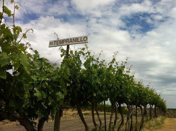 Les 15 plus grands vignobles du monde et leurs 10 principaux cépages