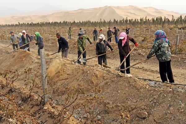 Vignes du Chateau Hansen situé à Wuhai dans la province autonome de Mongolie Intérieure (à l'extrémité ouest du désert de Gobi, près du fleuve Jaune). Sous le label bio, il produit des cuvées millésimées, élevées en fûts avec les seules levures naturelles du raisin, aux noms (en français) de Vin du fleuve jaune, Vin du désert mongol.