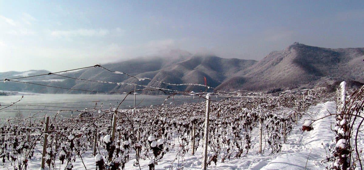 La province du Liaoning, à la frontière de la Corée du Nord et de la Russie produit les meilleurs vins de glace du pays. (Ici Changyu Golden Icewine)