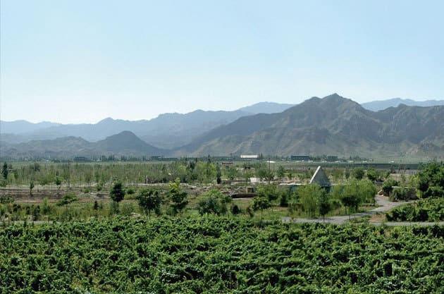 La région autonome de Ningxia a été désigné comme la région viticole la plus prometteuse de Chine