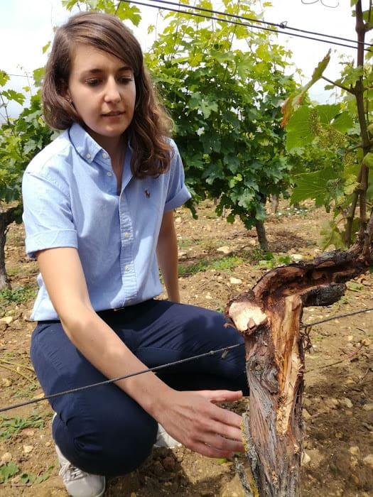 Anastasia Rocque, conseillère à la Chambre d'Agriculture d'Indre-et-Loire, à Panzoult (Chinon) devant un plant de vigne cureté (Photo FC)