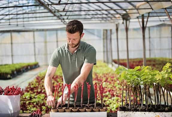 Le travail du pépiniériste viticole (Photo bordeaux.com)
