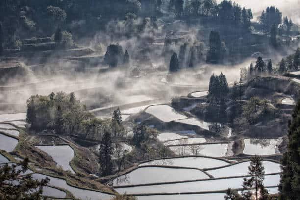 Préfecture de Niigata, les rizières en hiver
