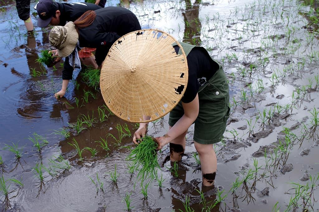 Cette rizière située dans le village d'Hakuba (Alpes japonaises) aux abords de la ville de Nagano (préfecture de Nagano) produit un riz à saké. Ses grains sont plus gros que la normale, riches en amidon et pauvres en protéines. La teneur élevée en amidon facilite la production d'alcool et la faible teneur en protéines empêche les saveurs de se décolorer dans la boisson. Par rapport aux variétés destinées à la table, son grain est plus robuste, un point important pour le polissage du grain (plus difficile à broyer notamment)