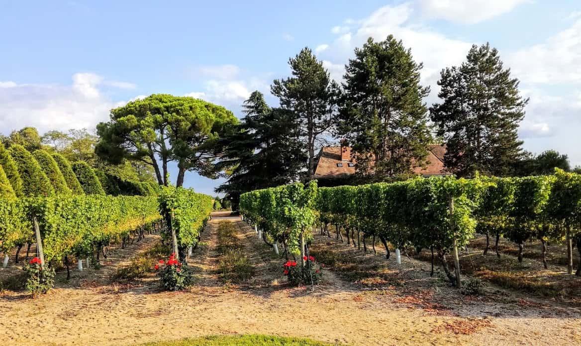 Chez Henry Marionnet, domaine de la Charmoise,à 30 km au sud de Blois, au point le plus élevé entre la Loire au nord, et le Cher au sud (Photo FC)