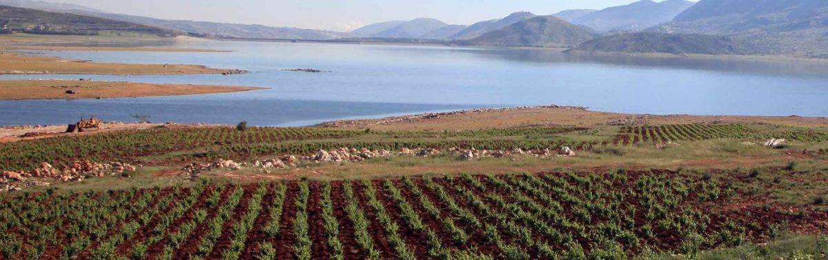Latourba s'étend sur plus de 45 ha de vignes nichées au bord du fleuve Litani, à Saghbine, surplombant le barrage de Qaraoun. Il a été créé par Elie Chehwan.
