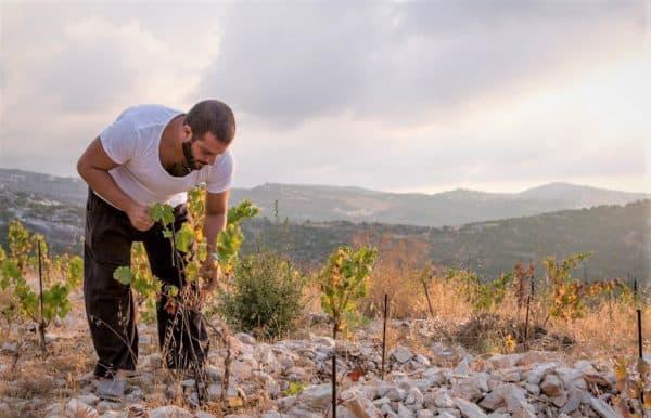 Liban2019, vins et vignobles: comment ne pas être admiratif !