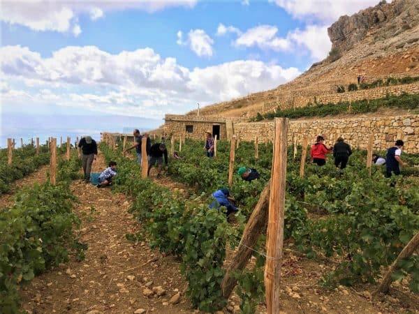 Vertical 33 à Chtaura, c'est 3,5 ha de vignes sur les flancs arides de Jabal Knaissé, au-dessus de Zahlé. Le but des 3 associés est de promouvoir au Liban le vin naturel, vins bio, souvent en mono-cépages, sans intrants ni levures ajoutées : nous ne les faisons même pas vieillir en fûts de bois, car nous recherchons l'expression du terroir.