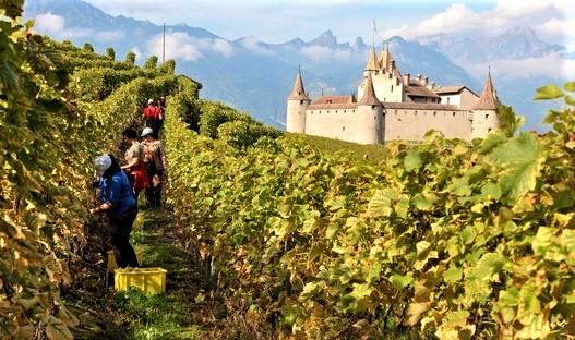 Le château d'Aigle construit à la fin du XIIe siècle se trouve dans le canton de Vaud en Suisse. Le chasselas se plaît sur le terroir d'Aigle. C'est la raison pour laquelle, chaque année y est organisé le Mondial du chasselas.