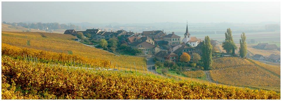 Fechy, village du canton de Vaud de 860 habitants, détient 177 ha de vignes. Il se situe au cœur de la Côte vaudoise, entre Morges et Nyon, face au lac et aux Alpes. Il est considéré comme la capitale du Chasselas.