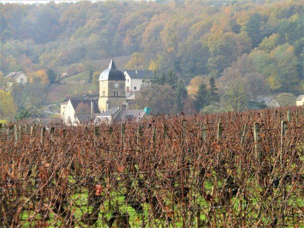 Bourgogne 2019 : chiffres clés et appellations de Bourgogne. Qu'est-ce que la Dénomination Géographique Complémentaire ?