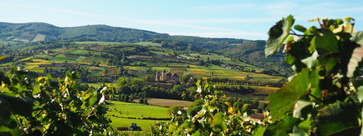 """Le village de Pierreclos est situé dans le """"pays Lamartinien"""", à l'extrême sud du Mâconnais. Etant à la frontière du Beaujolais, ses sols conviennent particulièrement bien au cépage gamay."""